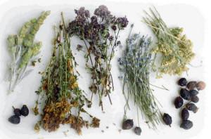 Травы от рака. Лечение рака травами