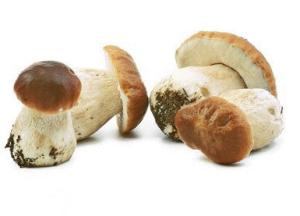 Грибы от рака. Лечение рака грибами