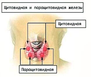 rak parashhitovidnoj zhelezy